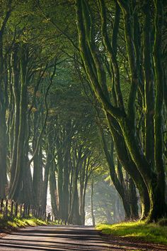 The Prince's Way  Dartmoor National Park, Devon