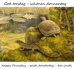 Happy Thursday, Turtle, Animals, Good Thursday, Nice Asses, Turtles, Animales, Animaux, Tortoise