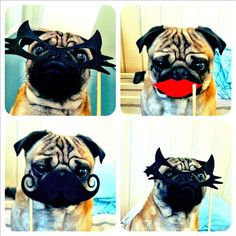 I have this new obsession with pugs