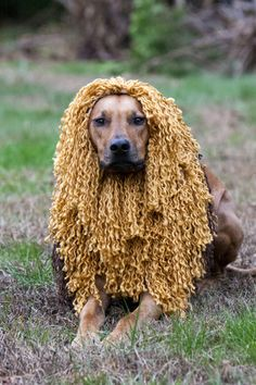 20 best lions mane images on pinterest lion costumes costume as if cairo hasnt been through enough trauma lately i made her a halloween costume this year to reflect her heritage as a lion hunting dog solutioingenieria Image collections