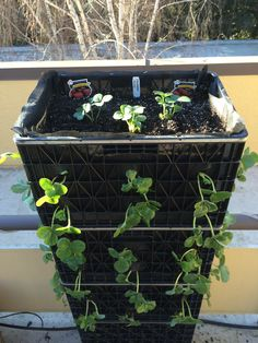 1- Landscape fabric $10-15 2- Planting mix $5-10 3- strawberry plants $3.50 (or grow from seed for $1.00) 4- Tomato fertilizer $9 5- Sure Start (this products help establish plants) $5-15