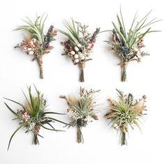 Ramos de flores silvestres de planta de aire / / o Tillandsia