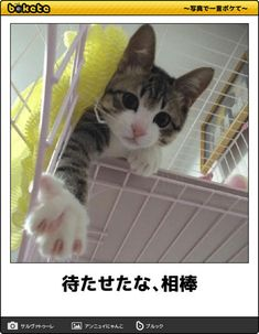 Take my paw! I've got yu! Very Cute Baby, Cute Baby Cats, Silly Cats, Kittens Cutest, Cats And Kittens, Funny Cats, Animals And Pets, Funny Animals, Cute Animals