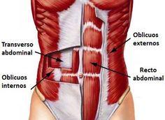 """Cuando hablamos de abdominales nos referimos principalmente a tres músculos: El recto abdominal, el músculo de los """"cuadraditos"""". Es el favorito de la mayoría, pero a pesar de ser el más visible, e..."""