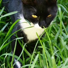 Hii Nike 😊 #mygreatcat #my_loving_pet #cat #gatto #catoftheday #catsofinstagram #catstagram #gatti #instacat #instacat_meows #bestmeow #topcatphoto #miao #catlover #gatto #catoftheday #katze #gato #chat #猫  #neko #猫好き #Exellent_Cats #子猫 #プッシーキャット #ニャー #甘い #愛猫
