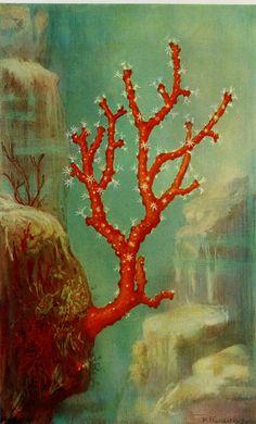 Gorgeous Vintage Coral Print C. 1900 by AntiquePrintBoutique
