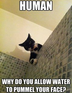 Human, why do you allow water to pummel your face?