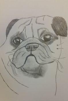 Pug drawing by Jade Hurdle