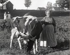 Grandma and the Cow