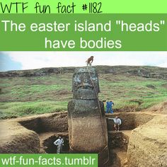 Easter island heads have bodies