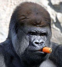 Don Gorilla..The untouchables