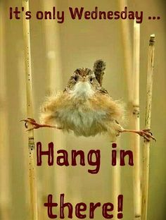 Good Night Quotes : QUOTATION – Image : Quotes Of the day – Description Wednesday Humor – Animal funny: Happy Wednesday! Hang in there. The weekend is coming! Sharing is Caring – Don't forget to share this quote ! Funny Wednesday Quotes, Wednesday Morning Quotes, Friday Quotes Humor, Wednesday Hump Day, Wednesday Humor, Morning Quotes For Him, Funny Good Morning Quotes, Good Day Quotes, Funny Quotes