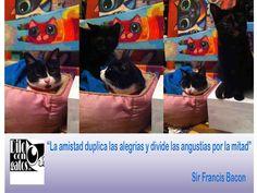 Luna ( bicolor y Yoko ( Carey ) en una banca de madera pintada a mano en el Estudio-Taller de Dilo con Gatos Mónica Padilla México