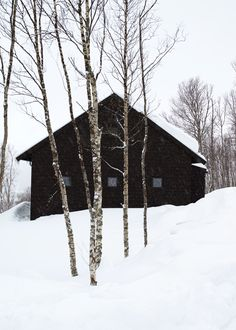 snowy morning  time to light my wood burning stove and drink some apple cider before chores.  I can already see it!