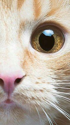 Pin by Sabine on Katzen/ cats Pretty Cats, Beautiful Cats, Animals Beautiful, Cute Animals, I Love Cats, Crazy Cats, Cool Cats, Cute Cats And Kittens, Kittens Cutest