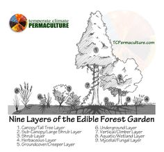 Temperate Climate Permaculture – Nine Layers of the Edible Forest Garden (Food Forest) Permaculture Design, Permaculture Principles, Permaculture Garden, Forest Garden, Farm Gardens, Urban Farming, Edible Garden, Fruit Trees, Dream Garden