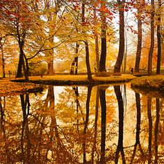 Golden Pond, The court of the fall fairies.