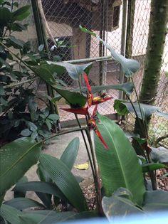 Costa Rican coffee plantation