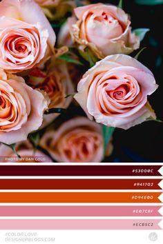 #colorlove #dblove Color Palette Color Palettes, Color Schemes, Flowers, Blog, Pintura, Colour Palettes, Colour Schemes, Color Pallets, Royal Icing Flowers