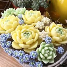60 Simple Succulent Diy Ideas For You – Cactus Colorful Succulents, Cacti And Succulents, Planting Succulents, Cactus Plants, Garden Plants, House Plants, Planting Flowers, Blooming Succulents, Succulents In Containers