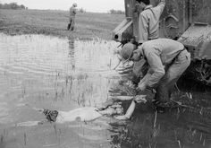"""""""A Vietnamese soldier ties the hands of a Viet Cong guerrilla to an armored troop carrier before dragging him through the stream in an effort to make him talk. The prisoner of war was caught with a weapon and documents during an operation held by Vietnamese troops in Dinh Tuong province south of Saigon, morning of May 22, 1964 during the Vietnam War."""""""