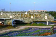 Nuovo Guinness World Record a Dubai per la più grande installazione floreale del mondo   Dream Blog Cruise Magazine
