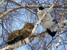 Parece que estos dos no solo ocuparon el lugar de las aves sino que se las habían comido antes de subirse
