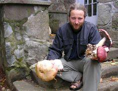 Violon et Champignon est une entreprise spécialisée dans la culture de champignons comestibles et la vente de mycélium de qualité. Elle a ét...
