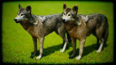 Goats, Husky, Animals, Animales, Animaux, Goat, Husky Dog, Animal, Animais