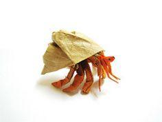 hermit crab art - Google Search