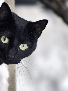 Black Cats need forever homes. =) Adopt a cat today from www.bestfriends.org