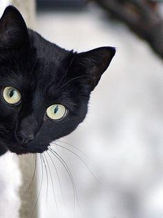 Gato negro asomándose