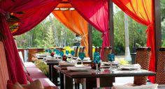 Ginger in Nuevo Vallarta. Plan your PV trip with Puerto Vallarta's ultimate travel guide: http://www.visit-vallarta.com