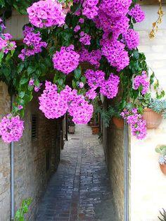 murvafürt Floral Wreath, Wreaths, Flowers, Gardening, Gardens, Plant, Floral Crown, Door Wreaths, Lawn And Garden