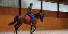 How to stop your horse from getting distracted by wind