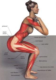 le #squat est considéré comme l'exercice maître qui travaille les muscles du bas du corps.