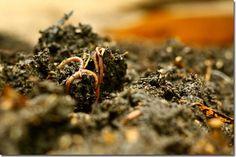 Worm Farming at Zaytuna Farm
