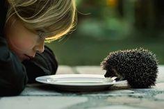 Hedgehog. =]