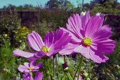 Schaugärten in Österreich - #gartentulln #tulln #niederösterreich #askEnrico Plants, Nature, Lawn And Garden, Plant, Planets