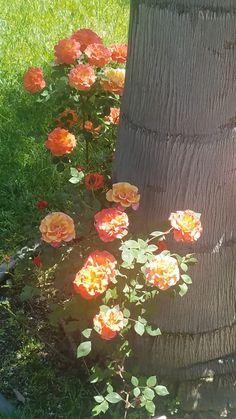 Flower Landscape, Flowers, Painting, Ideas, Art, Art Background, Florals, Painting Art, Kunst