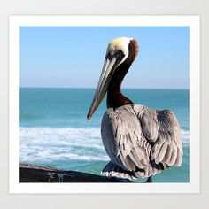 Red Pelican Art Print by A Frame A Day - $19.00