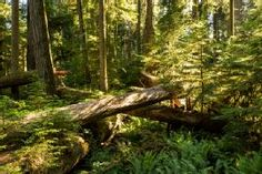 Downed Giants - Cathedral Grove, MacMillan Provincial Park, Vancouver Island, BC
