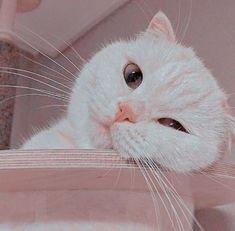 Cute Baby Cats, Cute Cats And Kittens, Cute Little Animals, Cool Cats, Kittens Cutest, Cute Babies, Wallpaper Gatos, Funny Cat Wallpaper, Gatos Cool