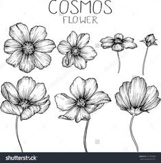 Find Cosmos Flowers Drawings Vector stock images in HD and millions of other royalty-free stock photos, illustrations and vectors in the Shutterstock collection. Thousands of new, high-quality pictures added every day. Vector Drawing, Botanical Drawings, Art Drawings, Drawings, Watercolor Flowers, Plant Drawing, Art, Cartoon Flowers, Flower Sketches