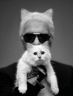 Kat Daddy