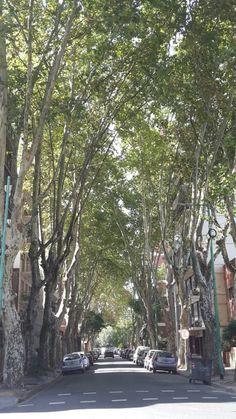 Belgrano R