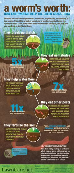 Earth Day Infographic: There are 53,000  earthworms per acre of land. These cute worms play a huge role in keeping your lawn and garden green. #earthday