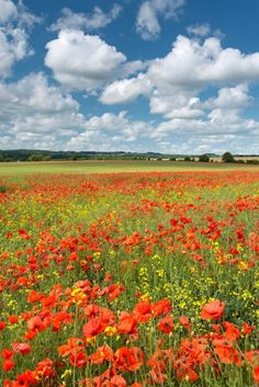 Colours of Summer - Dorset, England
