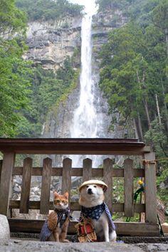 "Shiba dog is wearing ""Matatabi style"" for travel.Beige sandals are ""zori"""