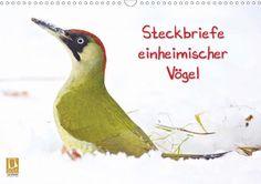 Steckbriefe einheimischer Vögel - CALVENDO Kalender von Klaus Feske -  #calvendo #calvendogold #kalender #fotografie #voegel #vogel #tierfotografie